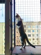 Aviary on the window for a cat