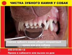 Cleaning of Tartar in dogs without anesthesia small breed